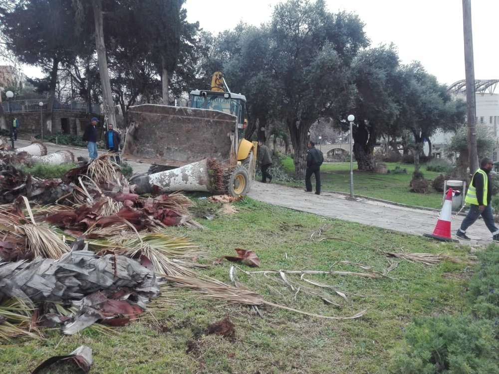 UPDATED-Greens: 'Palm trees massacred in Paphos' (photos)