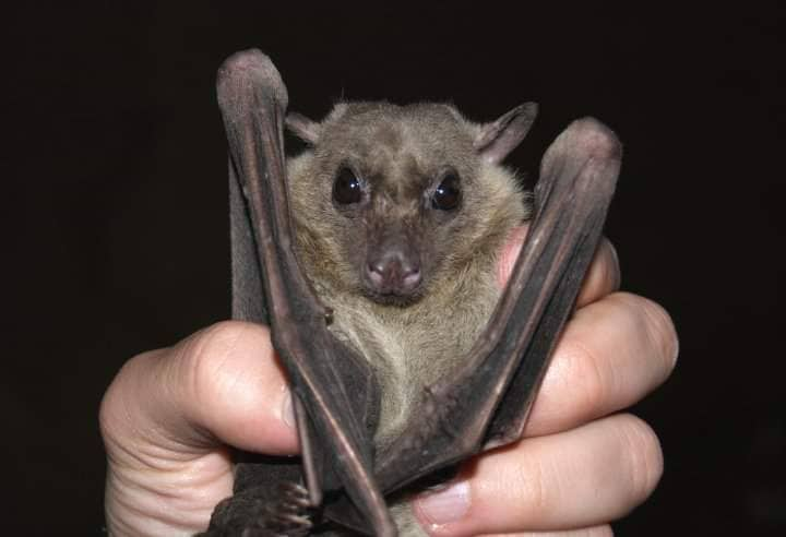 No winter sleep for fruit bats in Cyprus