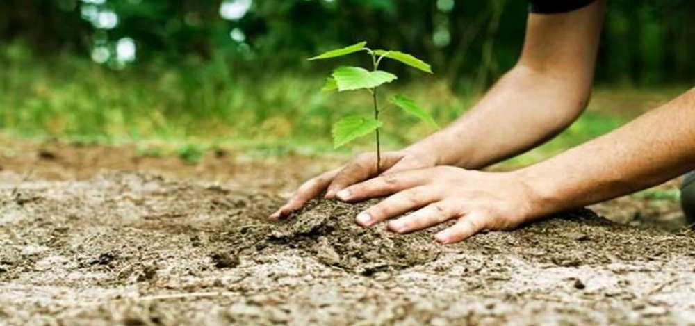 Athienou Municipality to plant 1500 trees