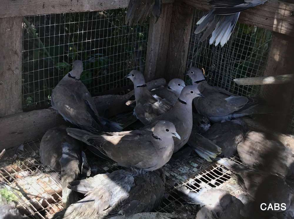 Bird protection NGO says spring illegal trapping at historic low