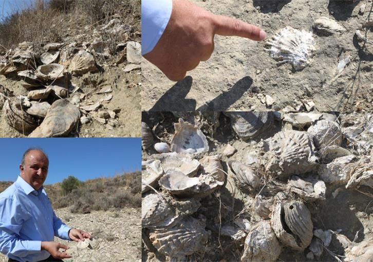 A nature trail with thousands of shells from millions of years ago (pics)