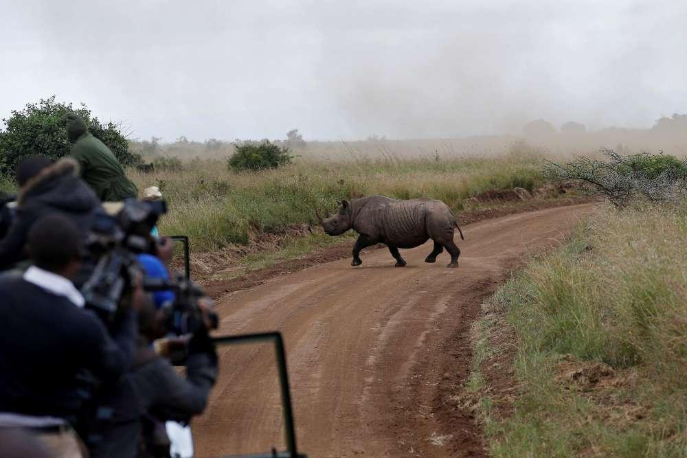 Seven endangered black rhinos die in Kenya in botched relocation - local media
