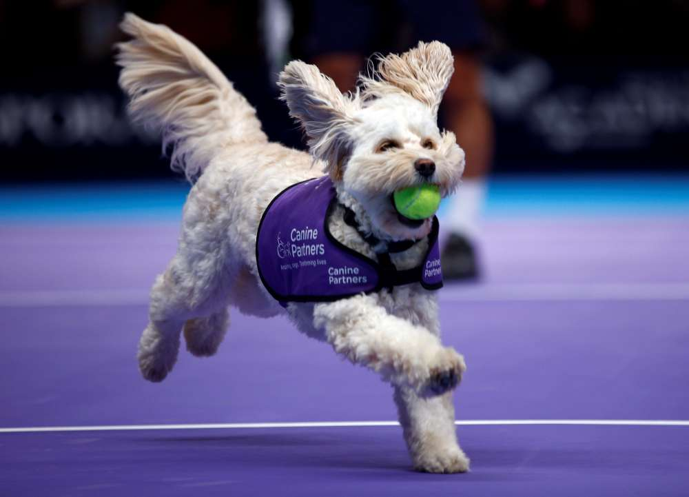 Fetch! Canines play role of 'ball dogs' at London tennis event (video)