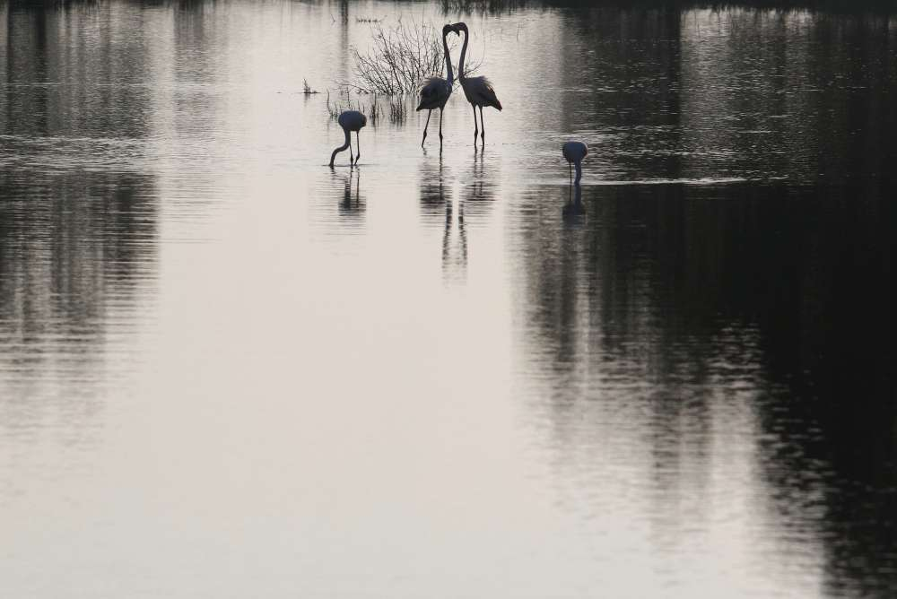 Larnaca salt lake flamingos capture the limelight (photos)