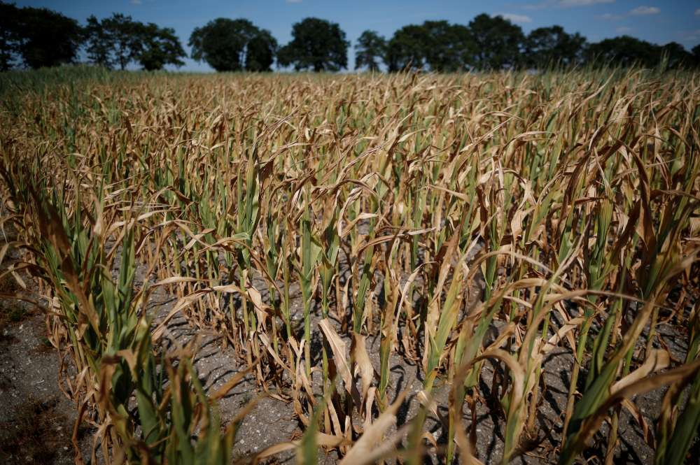 France asks EU for early farm aid to help drought-hit farmers