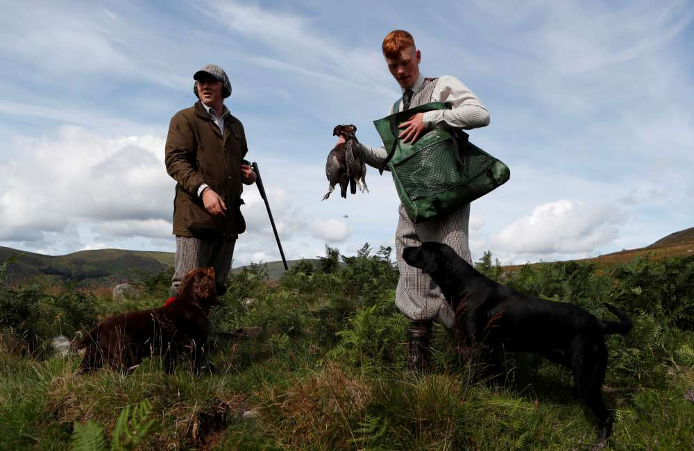 UK's Labour calls for grouse shooting review as