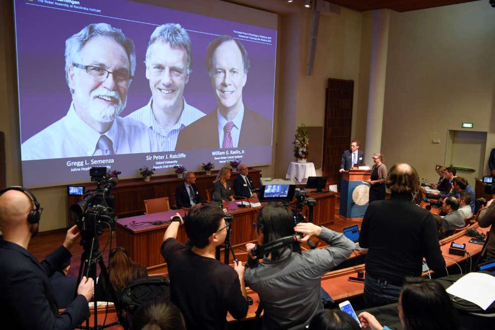 Doctors who deciphered body's response to oxygen win Nobel Medicine Prize
