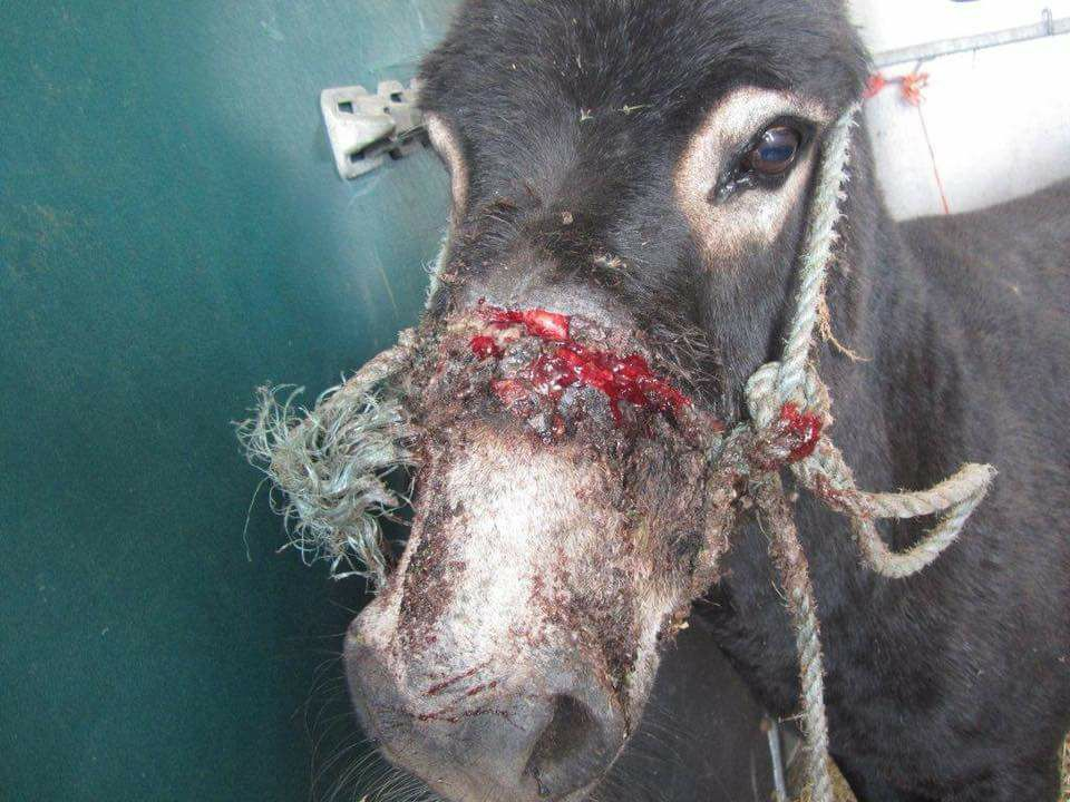 Protest planned to help Santorini donkeys