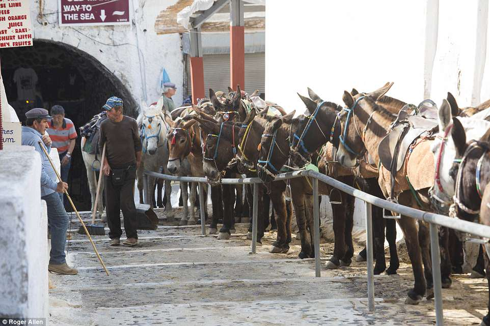 Step forward for donkey welfare in Santorini