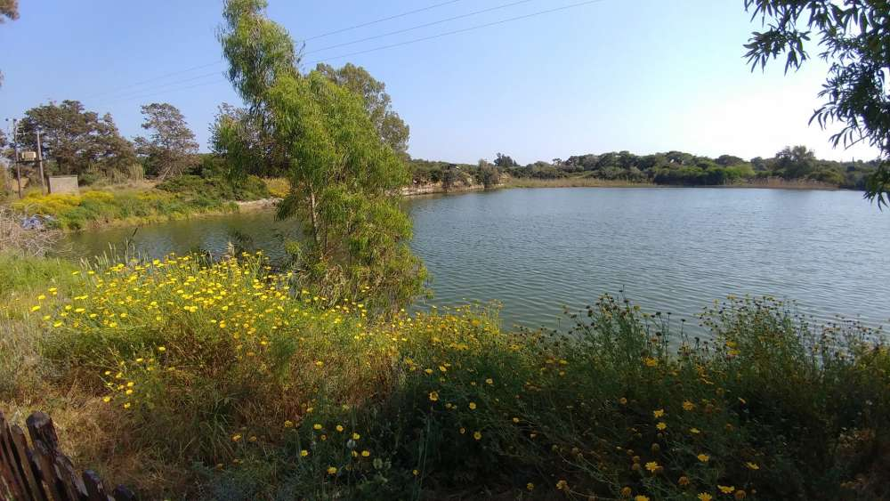 Despotiki Lake (Akrotiri): A secret oasis in Limassol