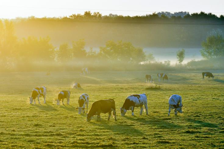 Call for proposals to support agricultural investments in Turkish Cypriot community