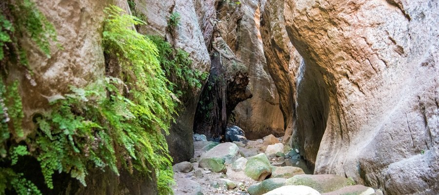 Avakas Gorge (Linear) - Pafos (Paphos) District