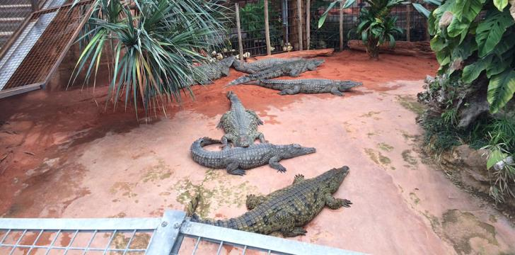 Greens want ban on crocodile