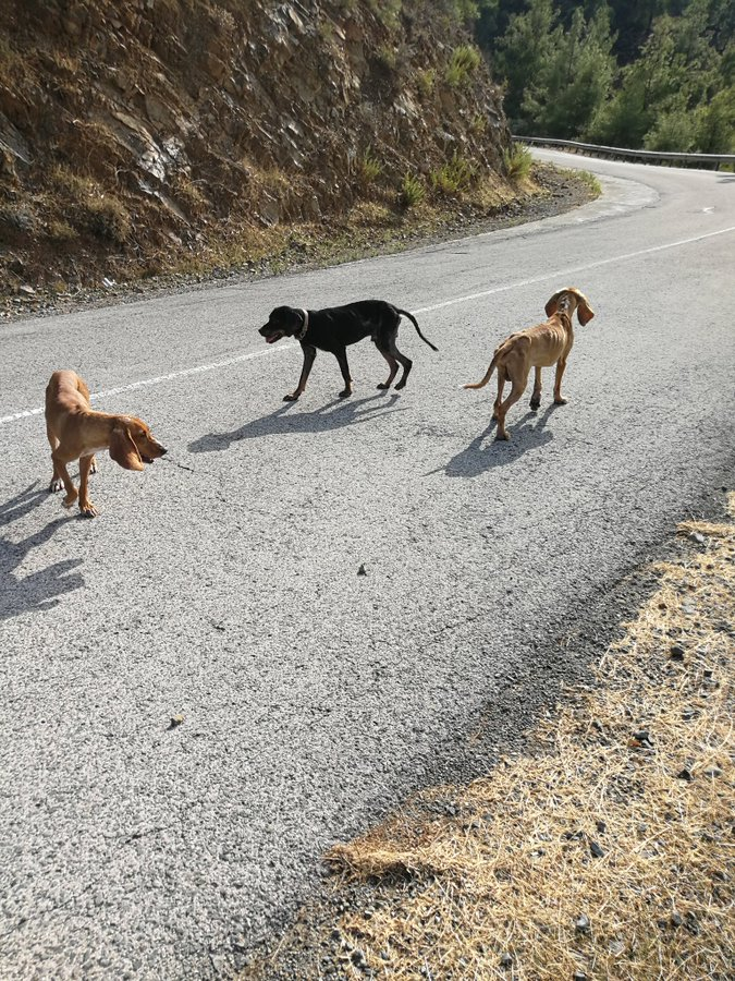 Rescue of hunting dogs sheds spotlight on sad plight of strays