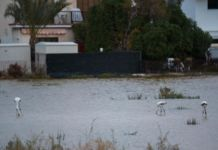 Rainfall creates new home for flamingos in Larnaca