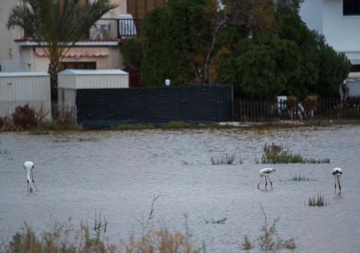 Rainfall creates new home for flamingos in Larnaca