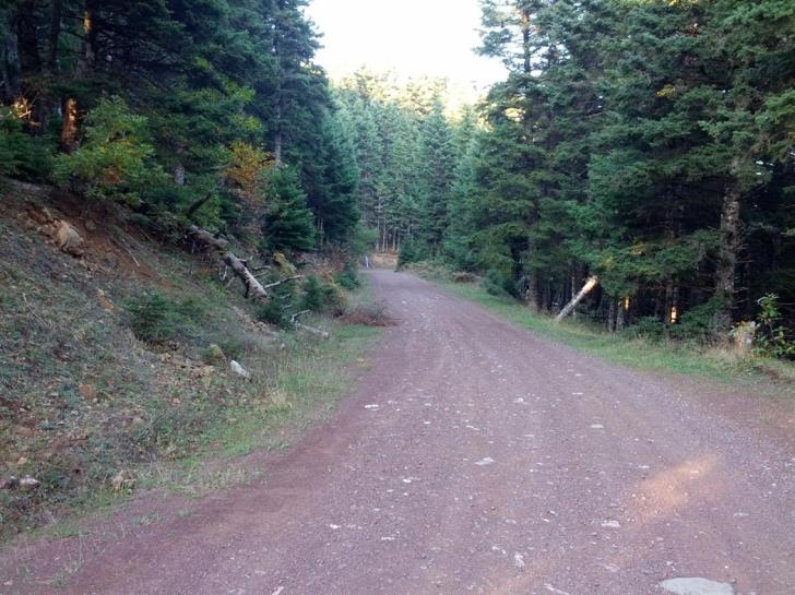 Forest roads reopen after repairs