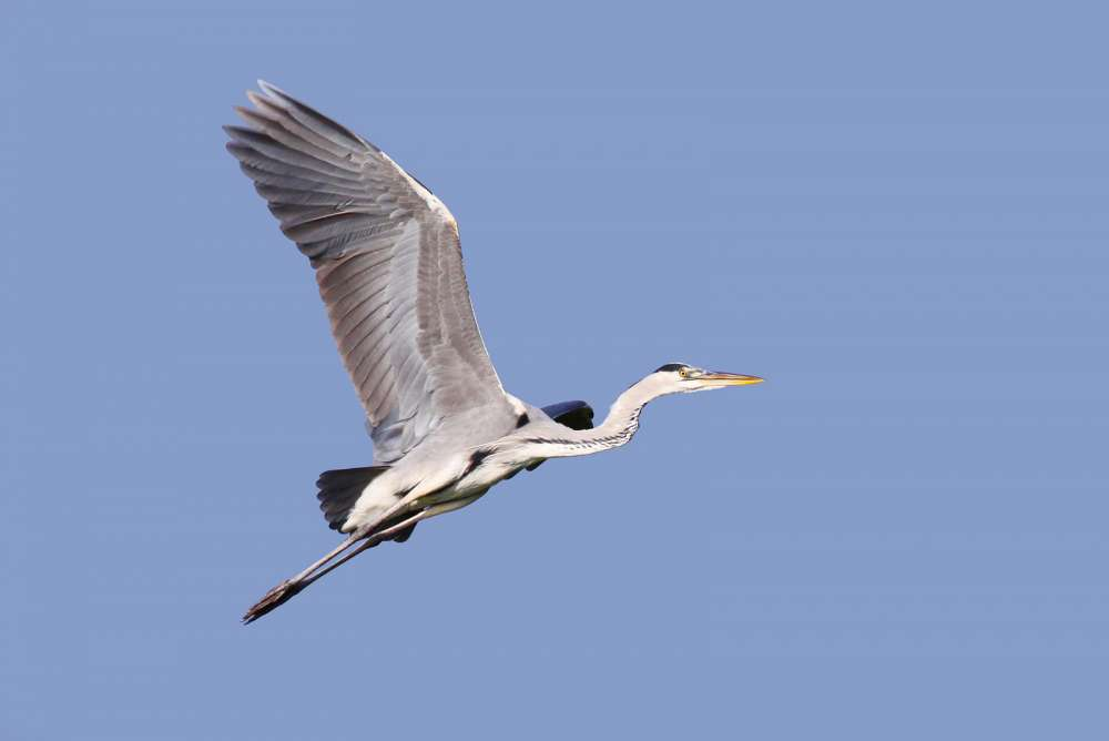 Athalassa Park to host autumn bird migration event