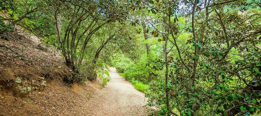 Two nature trails in Troodos temporarily closed Forestry Department says