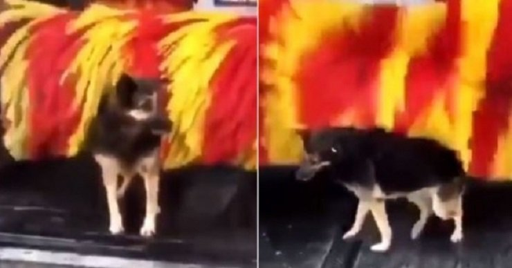 Stray dog uses car wash for free wash-up several times a week (video)
