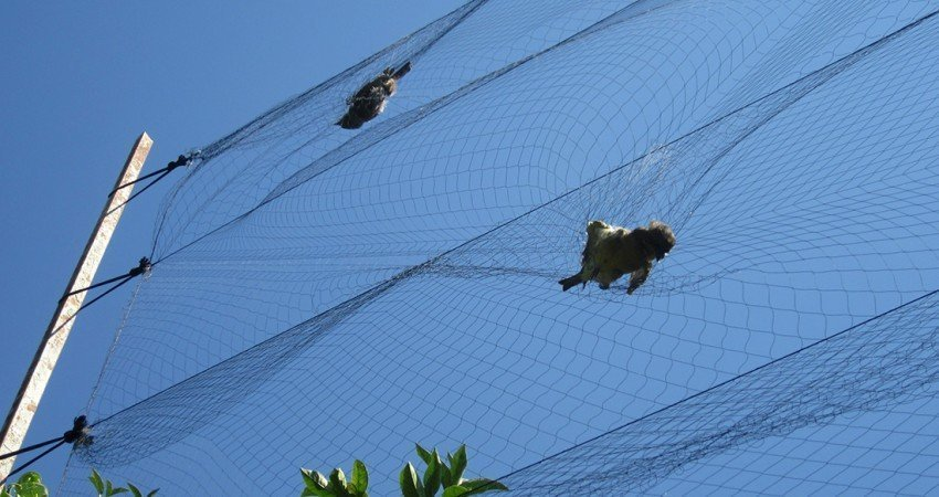 British Bases make progress against killing of songbirds