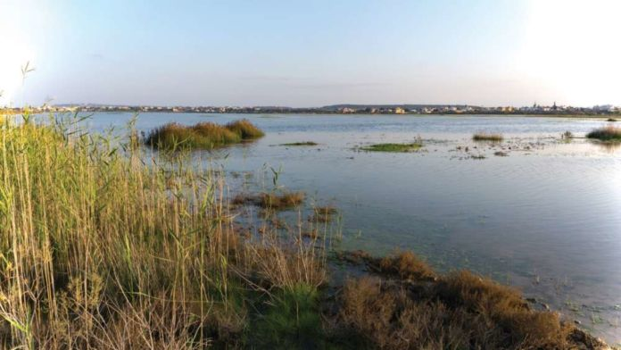 BirdLife Cyprus in new call to stop loss of water at Paralimni lake (video)