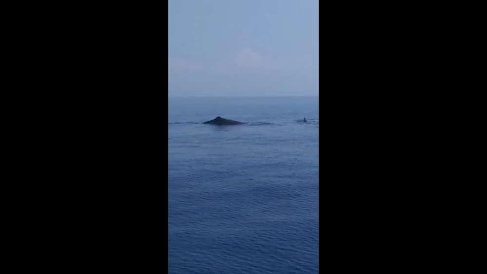 Four sperm whales