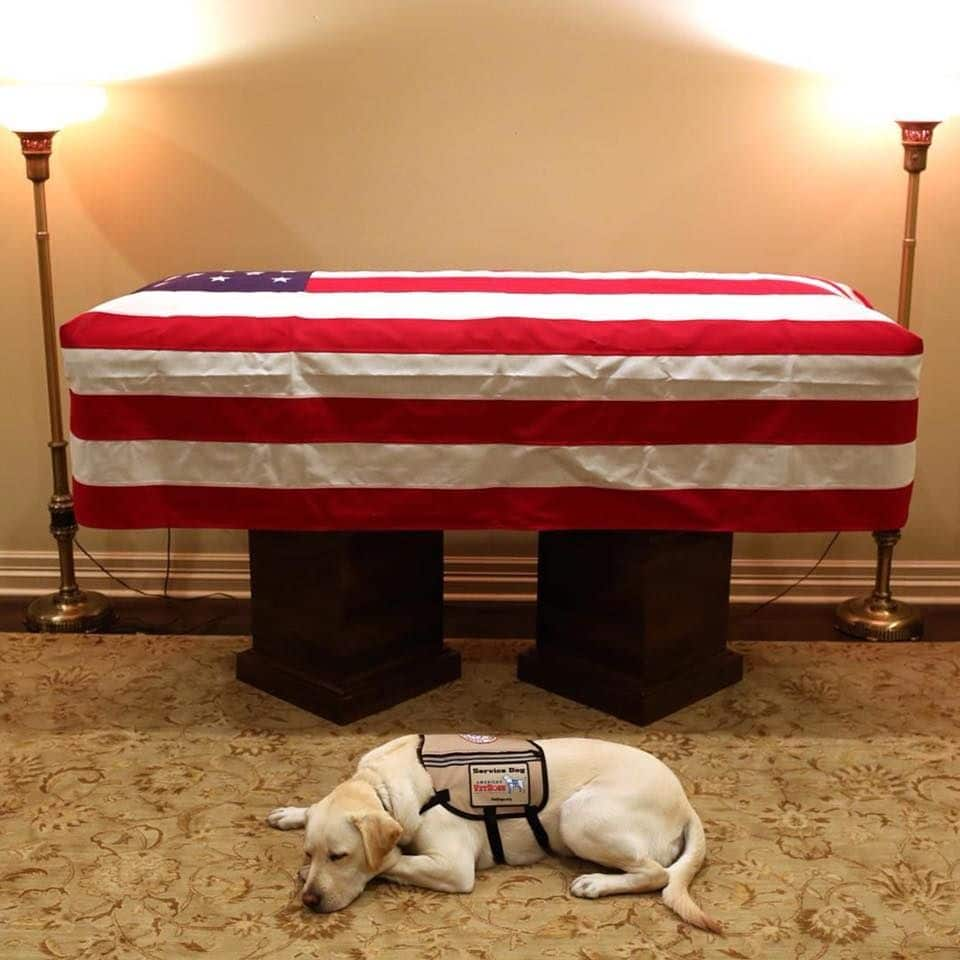 Sully the service dog to pay last tribute to George H.W. Bush