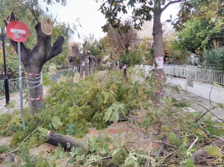 Objections over imminent mass cutting of trees at Kato Polemidia