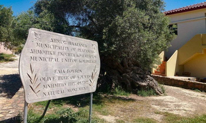 The world's oldest living olive tree is on Crete