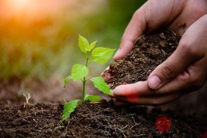 Pissouri tree planting