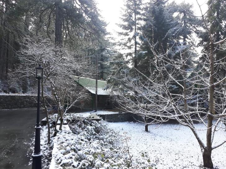 White... two days after Christmas for Troodos residents (pictures+videos)