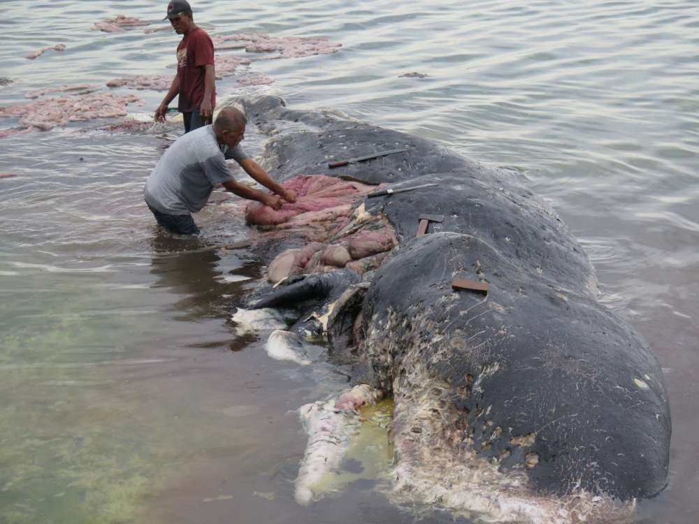 Indonesia: washed up dead whale found with 1