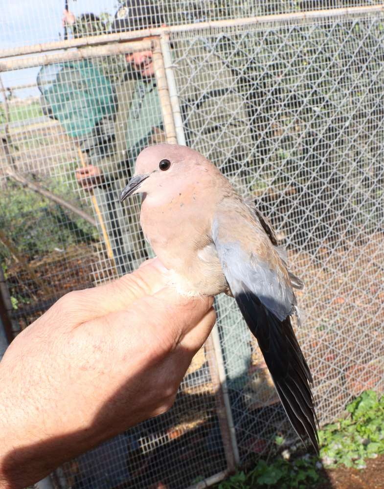 Man arrested for keeping wild birds in Achna