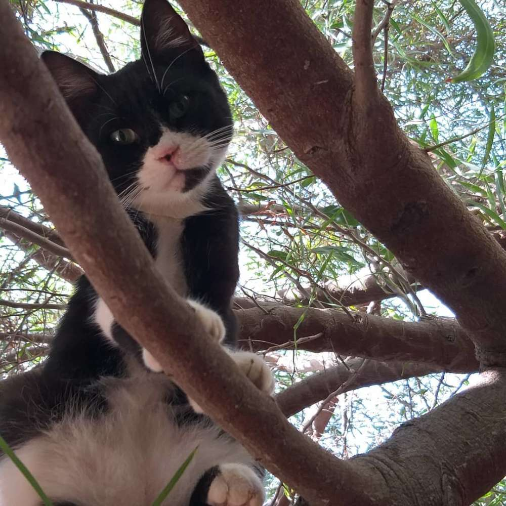 'You're Purrfect' is Limassol's new cat charity