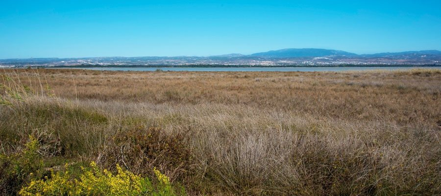 Bird watching in Cyprus this autumn (video)