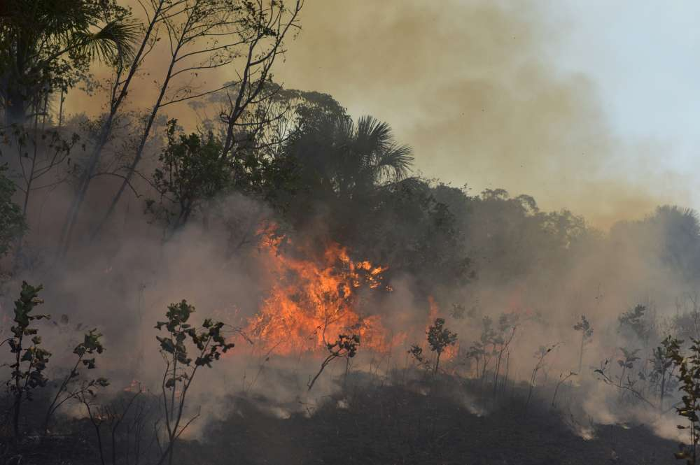 Brazil deforestation rises in August