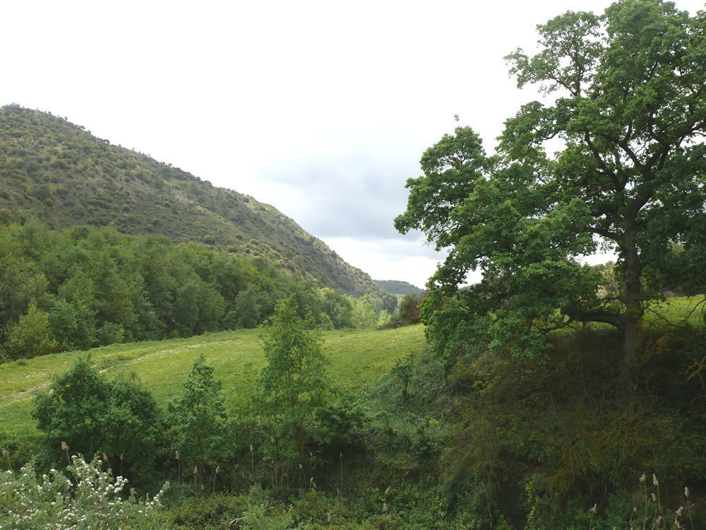 Cypriot forests absorb the lowest share of greenhouse emissions in the EU