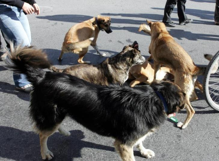 Animal Rescue Cyprus cries out for financial help