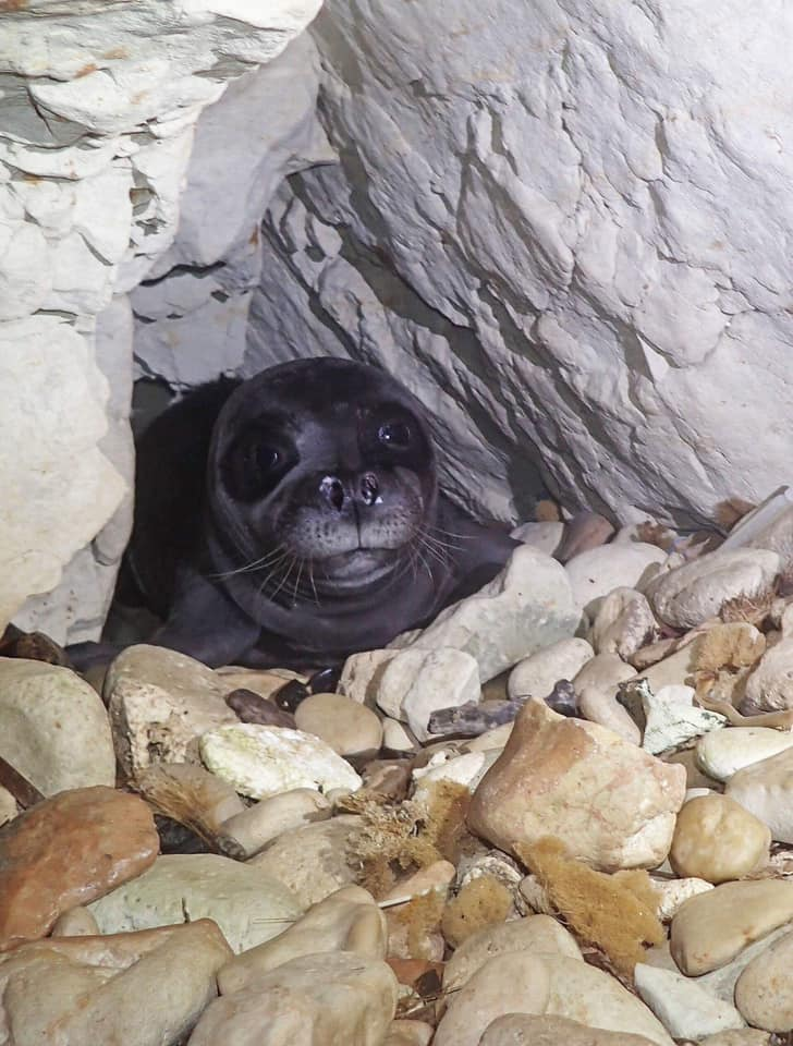 Aphrodite the seal found dead in sea off Paphos