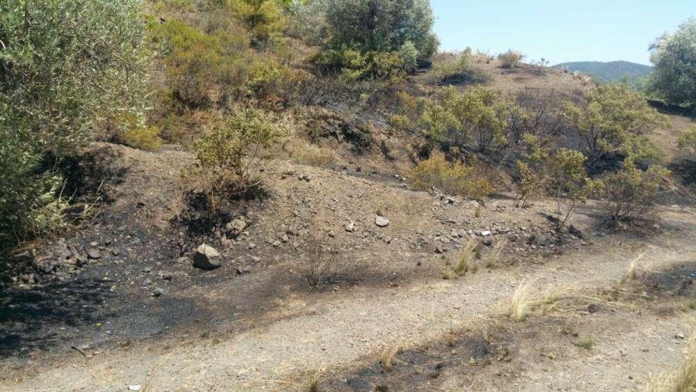 Kalo Chorio fire under control