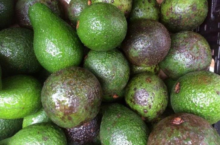 1000 kilos of avocados worth €2500 stolen from Kouklia field