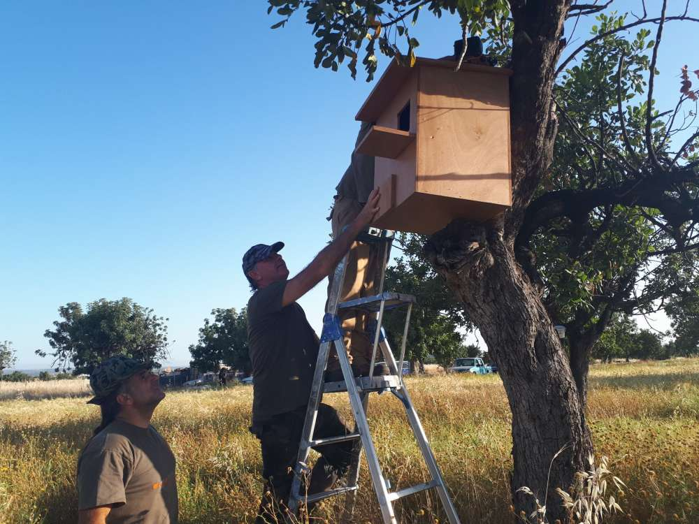 Nests for barn owls installed in Ypsonas (photos)