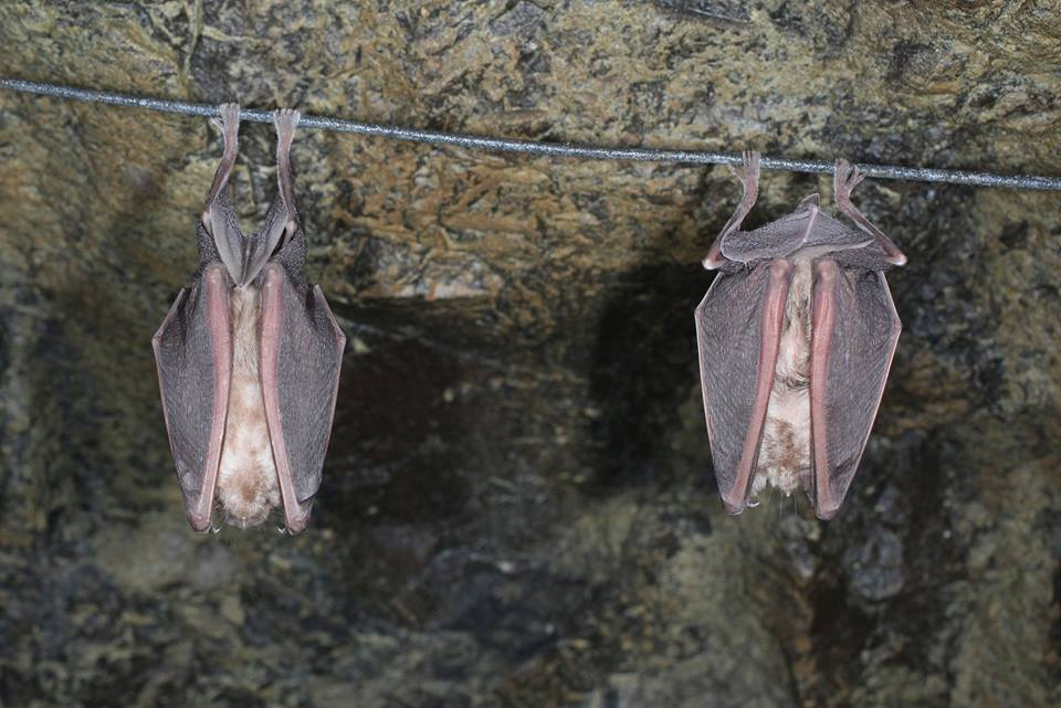 When it comes to bats... why is Cyprus unique? (pictures+video)