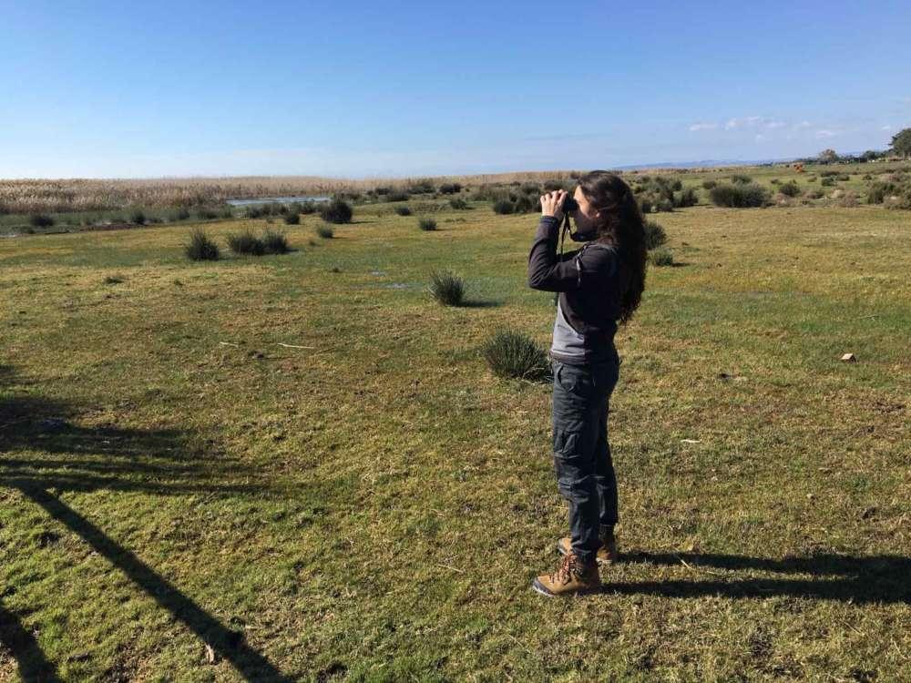 BirdLife Cyprus: Waterbird count underway