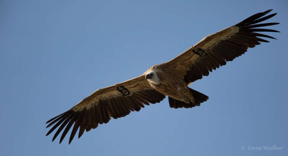 Birdwatching in Cyprus