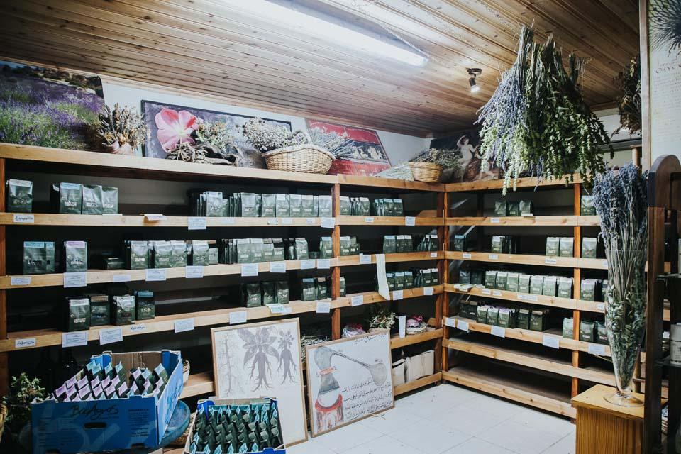 Botanical Workshop Giannoulas Lazarou