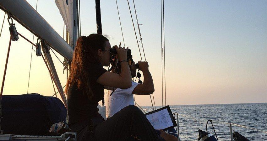 BirldLife Cyprus turns binoculars on seabirds