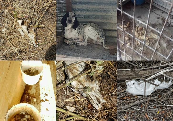 Shocking images of neglect and animal cruelty in supposed dog hospitality centre at Lefkara