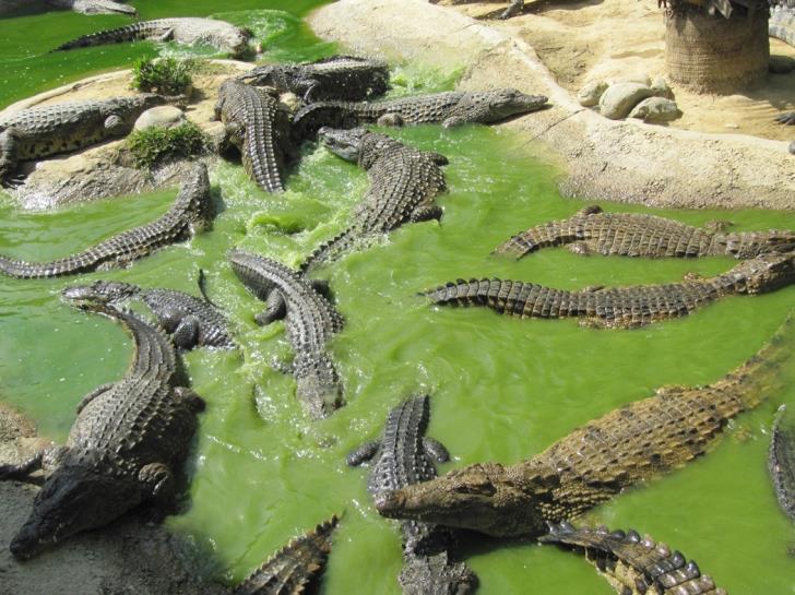 Green light for crocodile park